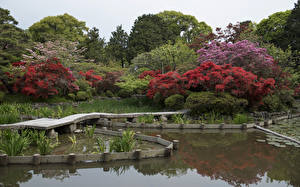 Картинка Япония Киото Парки Пруд Кусты