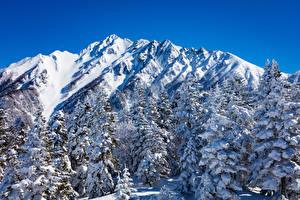 Обои Япония Зима Горы Снег Ель Nagano Природа