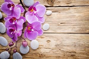 Фотография Орхидеи Камень