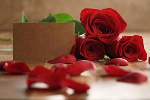 Обои Розы Шаблон поздравительной открытки Трое 3 Красный Лепестки