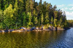 Картинка Россия Озеро Леса Ель Ladoga Lake Valaam Island Природа