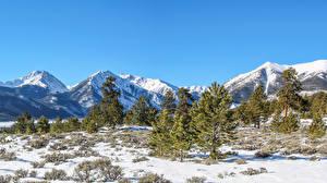 Картинки США Горы Зима Снега Ель Colorado Природа