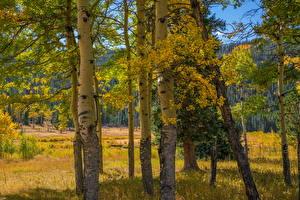 Фотографии Штаты Парки Осень Деревья Rocky Mountain National Park