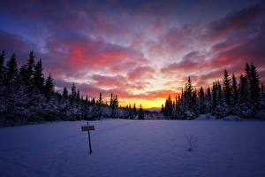 Фотография Зима Рассветы и закаты Леса Небо Снег Природа