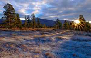 Обои Зима Рассветы и закаты Горы Деревья Трава Солнце Природа