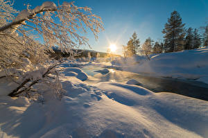Обои Зима Рассвет и закат Снегу Ветвь Природа