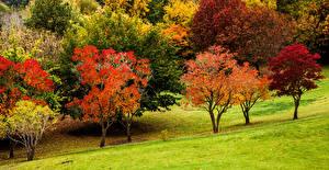 Фотография Австралия Парки Осенние Деревья Mount Lofty Botanic Garden