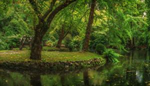Фото Австралия Парки Пруд Деревья Alfred Nicholas Memorial Gardens Природа