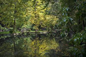 Фотографии Австралия Парки Пруд Деревья Alfred Nicholas Memorial Gardens Природа
