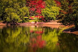 Картинка Австралия Парки Пруд Деревья Mount Lofty Botanic Garden Природа
