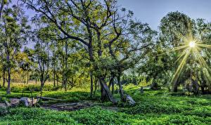 Картинка Австралия Деревья Солнце Лучи света Трава Warrumbungles National Park