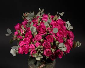 Картинки Букет Роза Черный фон Бордовая Цветы