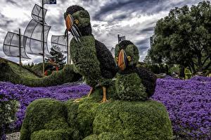 Картинки Канада Парки Птицы Дизайн Ottawa Lobelia Природа