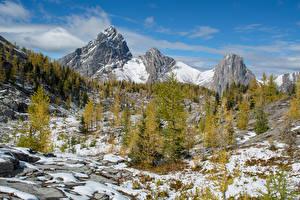 Фотографии Канада Парки Горы Зима Банф Снег Ель Природа