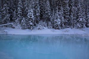 Фотография Канада Парк Зима Леса Побережье Банф Снегу Ели