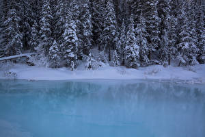 Фотография Канада Парки Зима Леса Побережье Банф Снег Ель Природа