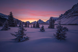 Фото Канада Парки Зима Горы Рассветы и закаты Банф Снег Ель Природа