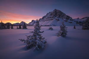 Обои Канада Парки Зима Рассвет и закат Банф Ели Снегу Утес