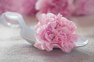 Картинки Гвоздики Вблизи Ложка Розовый Цветы