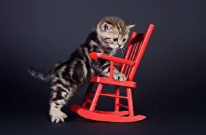 Картинки Коты Котята Кресло Животные