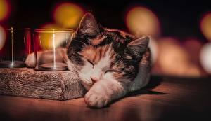 Обои Кошки Спит Животные картинки