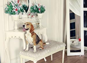 Фотографии Новый год Собаки Бигля животное