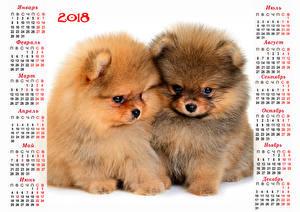 Обои Рождество Собака Календарь 2018 2 Щенка Шпиц Русские Животные