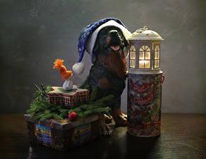 Фотографии Рождество Собаки Свечи Фонарь Шапки