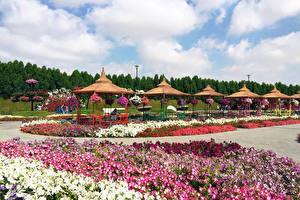 Фото Дубай Сады Дизайн Газон Miracle Garden