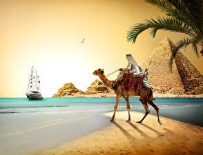 Фотографии Египет Пустыни Верблюды Берег Корабли Парусные Пирамида Cairo Природа