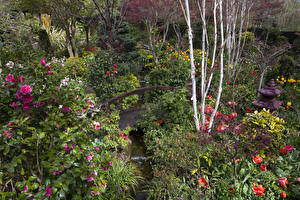 Фотографии Англия Сады Камелия Мосты Кусты Walsall Garden Природа