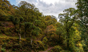 Картинка Англия Парки Деревья Мох Dockray