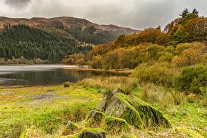 Фотографии Леса Озеро Осень Камни Холмы Мох Кусты Loch Chon Природа