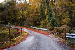 Фото Леса Дороги Осенние Ограда Природа