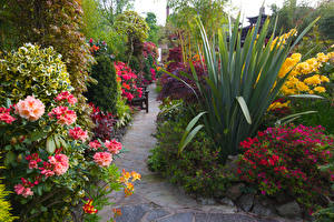 Картинки Германия Сады Альстрёмерия Кусты Walsall Garden
