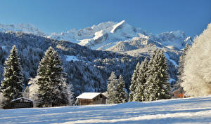 Картинки Германия Горы Зима Альпы Ель Снег Garmisch Partenkirchen