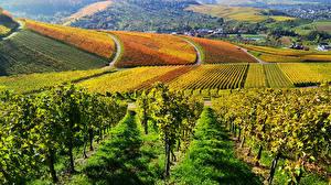 Картинка Германия Пейзаж Поля Виноградник Кусты Struempfelbach