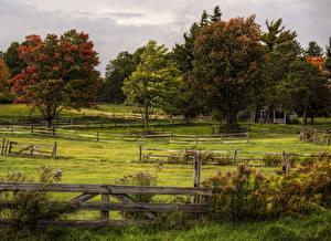 Обои Луга Деревья Кусты Ограда