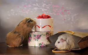Картинки Морские свинки Двое Подарки Животные