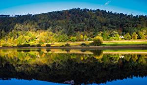 Фотография Ирландия Леса Речка Осенние Отражение Wicklow Природа