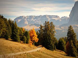 Обои Италия Горы Осенние Леса Ель Тропинка Bolzano