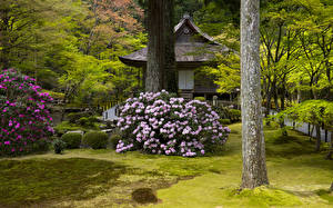 Фотография Япония Киото Парки Пагоды Рододендрон Ствол дерева Кусты Природа