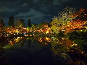 Картинки Япония Парки Пруд Отражение Деревья Ночные Osaka
