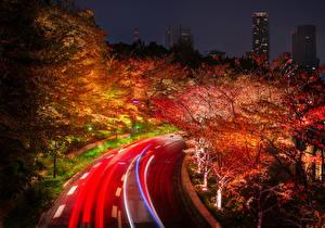Картинка Япония Токио Дороги Осенние Деревья Ночные