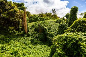 Фотографии Маврикий Тропики Кусты