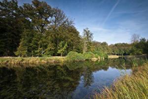 Фотографии Нидерланды Речка Леса s-Graveland Природа