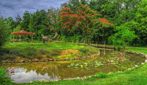 Картинка Парки Пруд Птицы Деревья Природа
