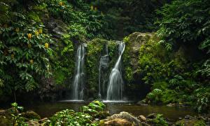 Обои Португалия Парки Водопады Мох Parque Natural da Ribeira dos Caldeiroes