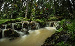 Фотографии Португалия Парки Водопады Кусты Мох Terra Nostra Gardens Azores Природа