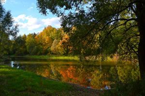 Картинка Россия Осенние Леса Озеро Ветки Moscow region Природа